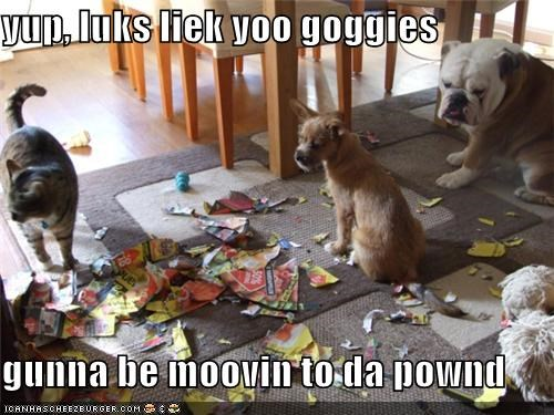 yup, luks liek yoo goggies  gunna be moovin to da pownd