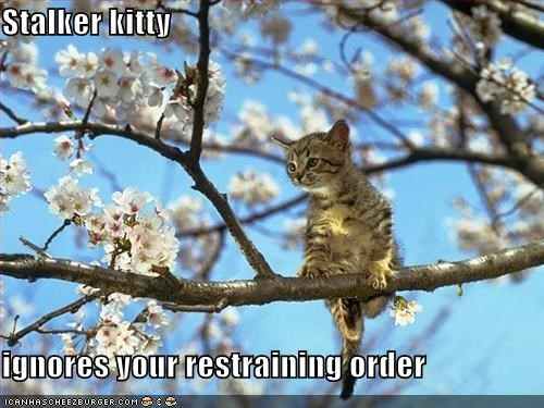 Stalker kitty  ignores your restraining order