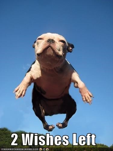 adorable,bulldog,flying,genie in a bottle,happy,happy face,puppy,whatbreed,wishes