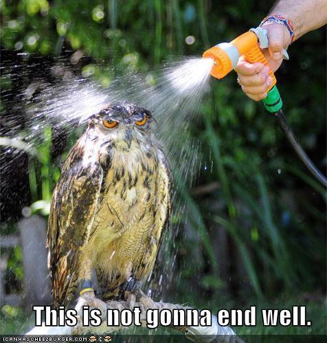 caption,do not want,lolbirds,lolowls,wet