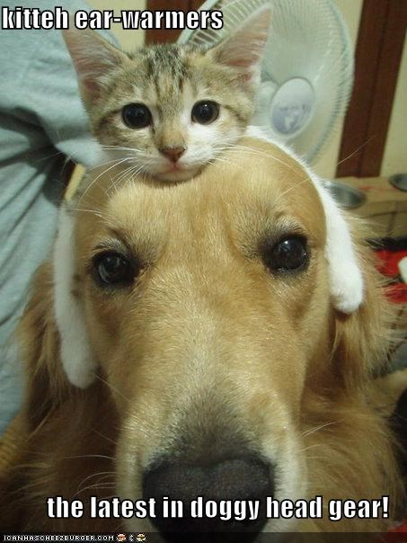 kitteh ear-warmers  the latest in doggy head gear!
