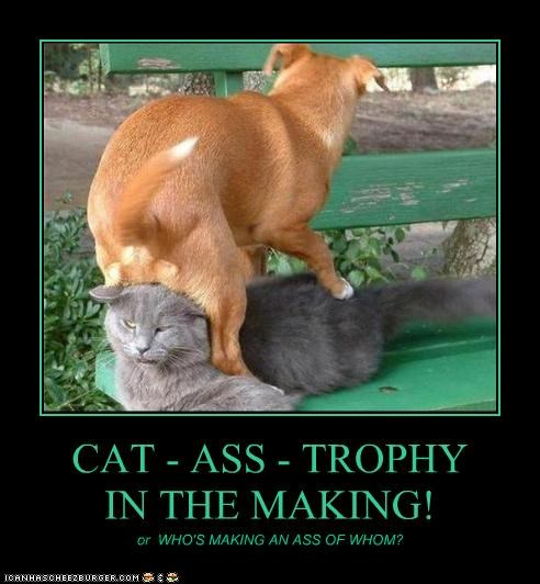 CAT - ASS - TROPHY IN THE MAKING!