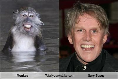 Monkey Totally Looks Like Gary Busey