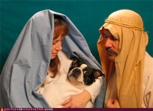 biblical,costume,dogs,joseph,mary,wtf