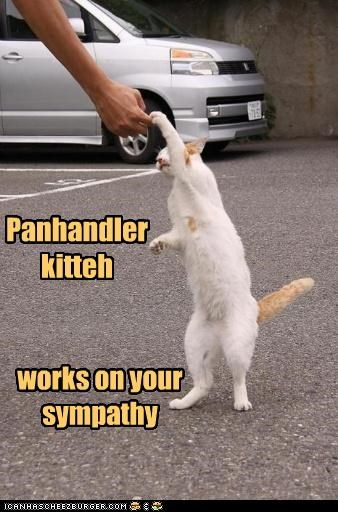 Panhandler kitteh  works on your sympathy