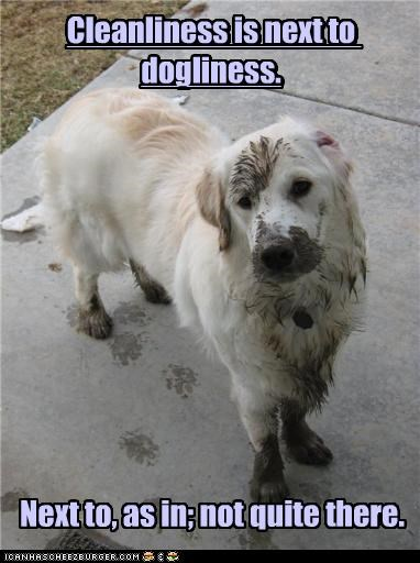 Cleanliness is next to dogliness.           Next to, as in; not quite there.