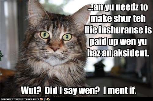 accident,caption,captioned,cat,difference,if,insurance,life,life insurance,mistake,necessity,need,paid,what,when