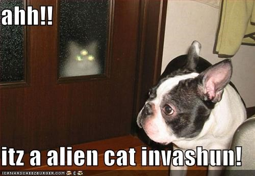 ahh!!  itz a alien cat invashun!