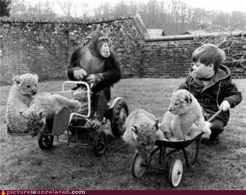Monkey & Children Like To Push Lions