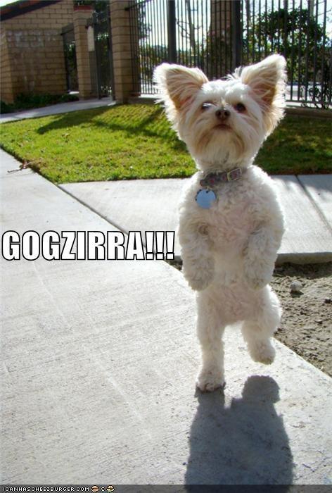 GOGZIRRA!!!