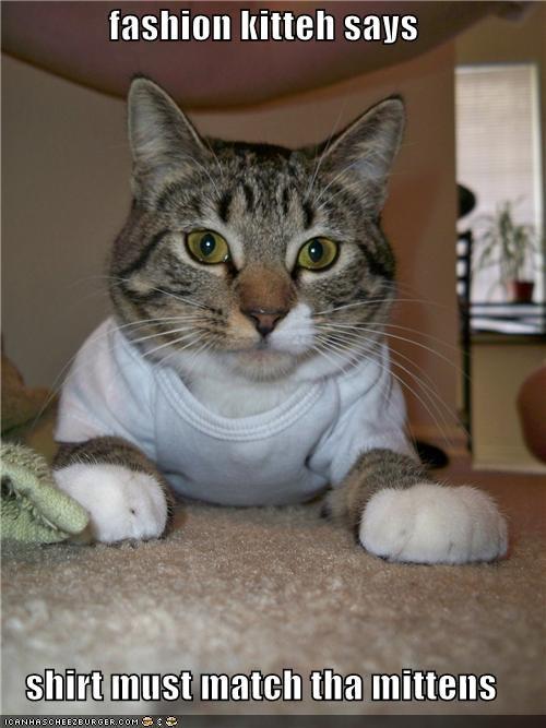 caption,fashion kitteh,matching,mittens,shirt