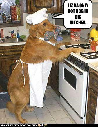 I IZ DA ONLY HOT DOG IN DIS KITCHEN.