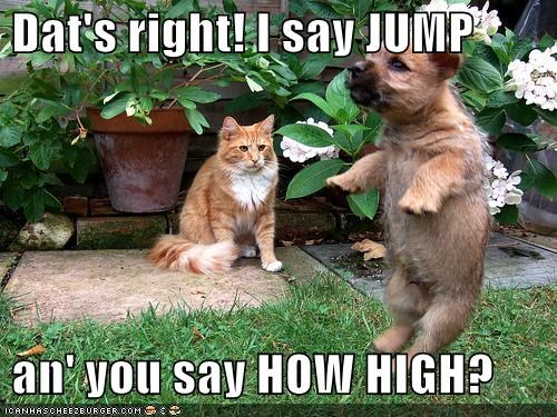 Dat's right! I say JUMP   an' you say HOW HIGH?