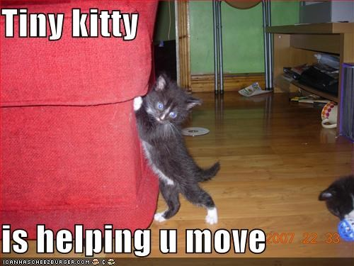 Tiny kitty  is helping u move