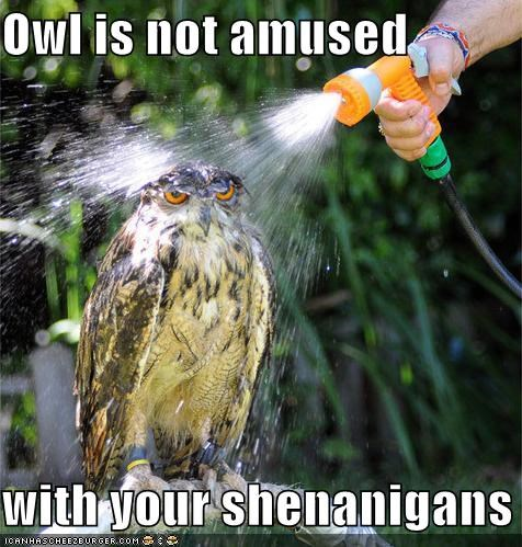 Owl is not amused  with your shenanigans