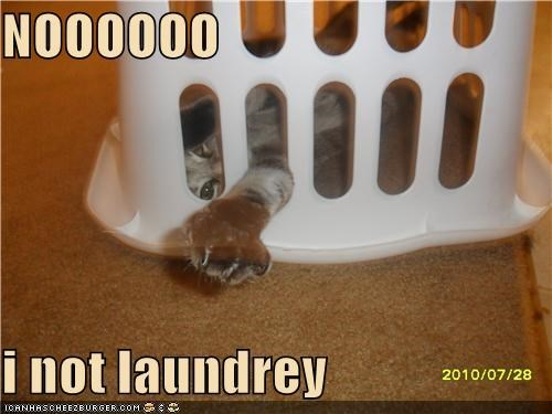 NOOOOOO  i not laundrey