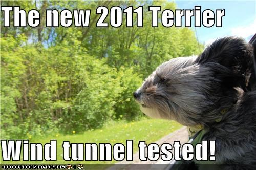2011,car commercial,cute,terrier,tested,whatbreed,wind,wind tunnel