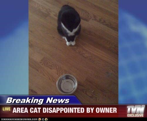 Breaking News - AREA CAT DISAPPOINTED BY OWNER