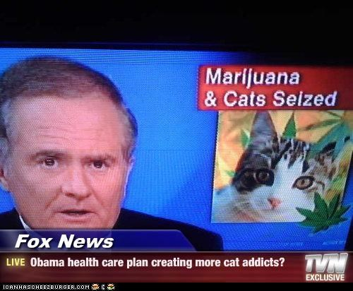 Fox News - Obama health care plan creating more cat addicts?