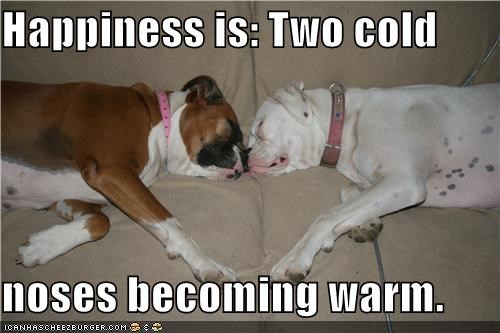 Happiness is: Two cold  noses becoming warm.