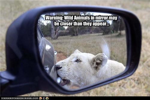 Warning: Wild Animals in mirror may  be closer than they appear...