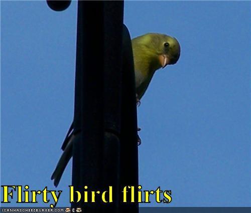 Flirty bird flirts
