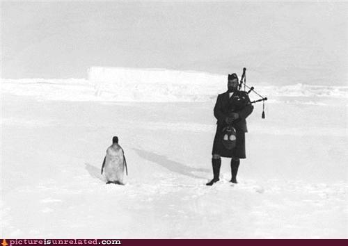 Piper & Penguin