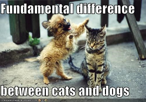 Fundamental difference  between cats and dogs