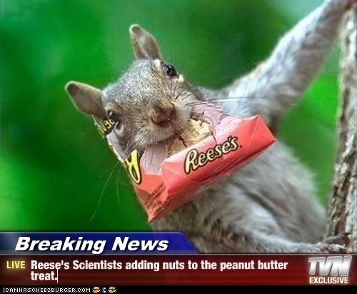 Breaking News - Reese's Scientists adding nuts to the peanut butter treat.