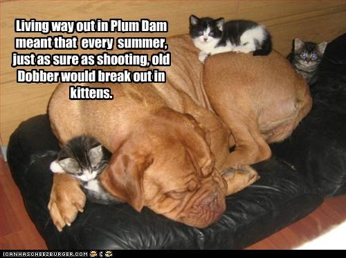 Living way out in Plum Dam meant that  every  summer,  just as sure as shooting, old Dobber would break out in kittens.