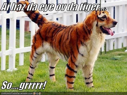 Ai haz da eye ov da tiger....  So....grrrrr!