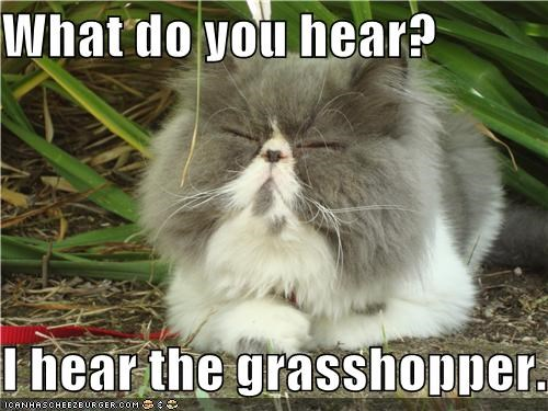 What do you hear?  I hear the grasshopper.
