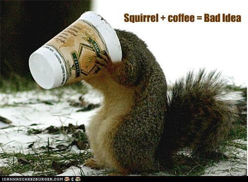 Squirrel + coffee = Bad Idea