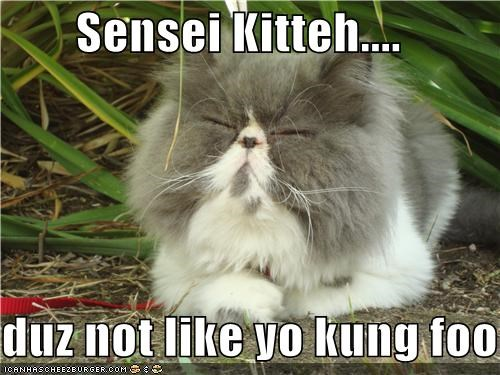 Sensei Kitteh....  duz not like yo kung foo