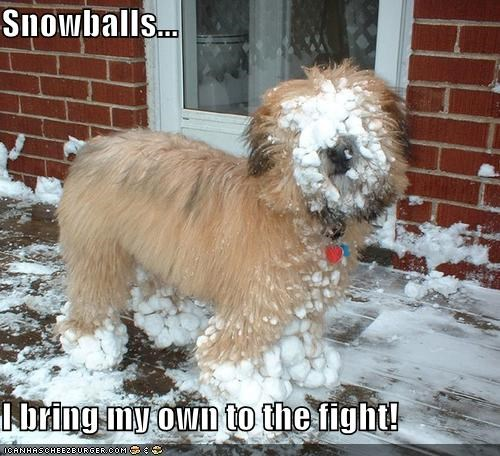 Snowballs...  I bring my own to the fight!