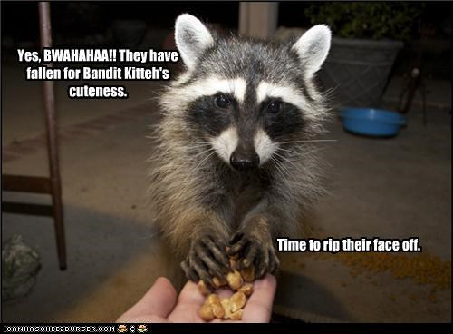 Yes, BWAHAHAA!! They have fallen for Bandit Kitteh's cuteness.