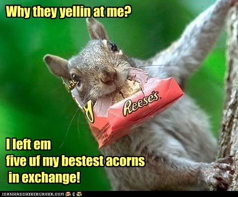 Why they yellin at me?         I left em  five uf my bestest acorns  in exchange!