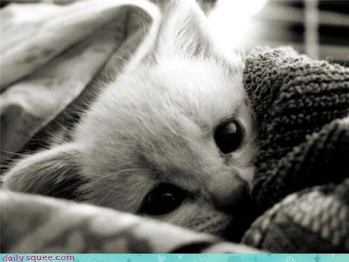 blanket,kitten,sleepy