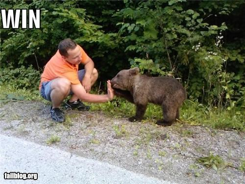 awesome,bears,cubs,failboat,g rated,high fives,nautre,win