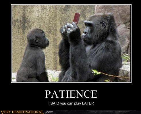 animals,apes,cute,ds,gorilla,impossible