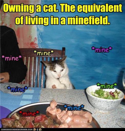caption,cat,danger,minefield,ownership,possession