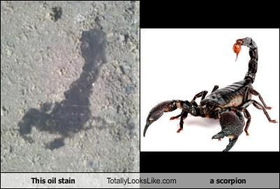 This oil stain Totally Looks Like a scorpion