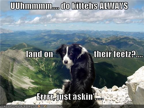 UUhmmmm.... do kittehs ALWAYS                 land on                        their feetz?.... Errrr, just askin'.....