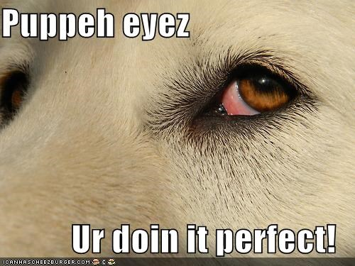 Puppeh eyez  Ur doin it perfect!