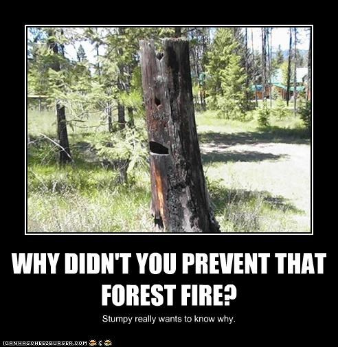 WHY DIDN'T YOU PREVENT THAT FOREST FIRE?