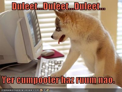 computer,delete,google,hard drive space,husky,mixed breed,puppy