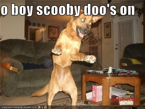 excited,happy,happy dog,jumping,mixed breed,scooby doo,stoked,television,TV