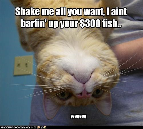 Shake me all you want, I aint barfin' up your $300 fish..