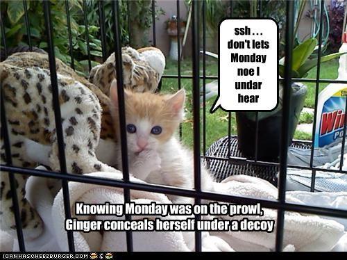 ssh . . . don't lets Monday noe I undar hear
