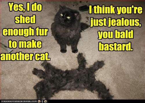 Yes, I do shed enough fur to make another cat.